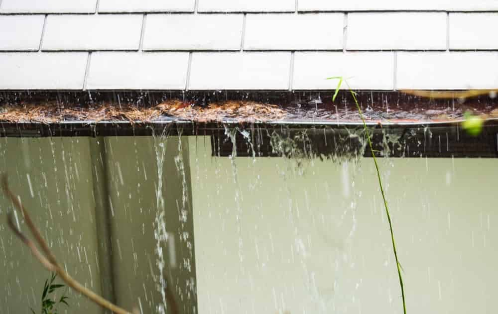 Clean your (clogged) gutters | Alexander and Xavier Masonry